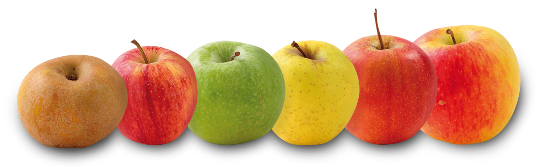 montage pomme