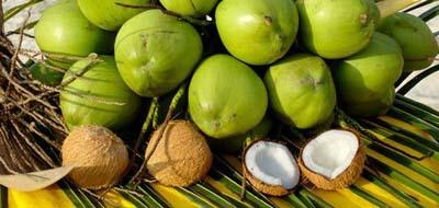 terapia-clark-cocos-verdes